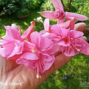 PinkGalore-fuchsia