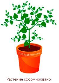 Формирование растения